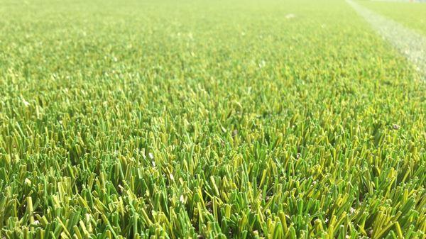 Ten Cate Grass